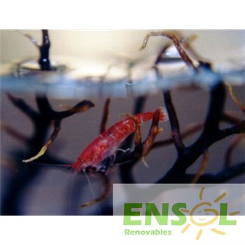 Small Pod Ecosphere